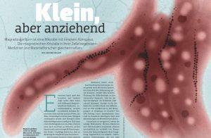 Magnetospirillum: Klein, aber anziehend